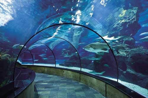 长风公园水族馆门票_长风公园海洋世界门票团购_长风海洋世界